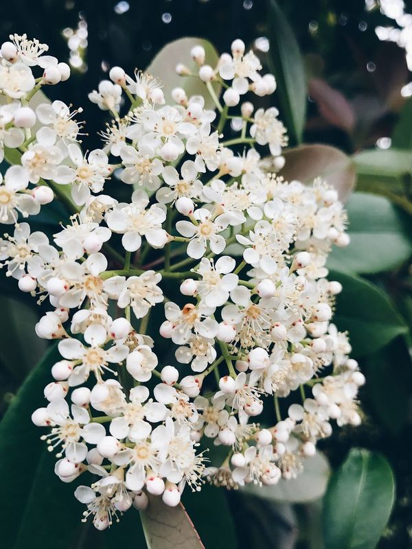 Flower Nature Fragility Close-up Growth Beauty In Nature Petal Freshness No People Plant Day Focus On Foreground Flower Head Beutiful Moments.  Relax Blooming Outdoors Branch