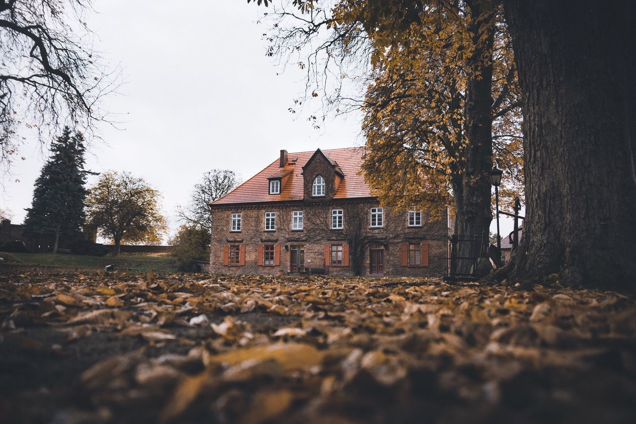 A haunted house. Elbe Germany Tree Autumn Nature Built Structure No People Building Exterior Outdoors Bare Tree Day Surface Level Architecture Sky Beauty In Nature