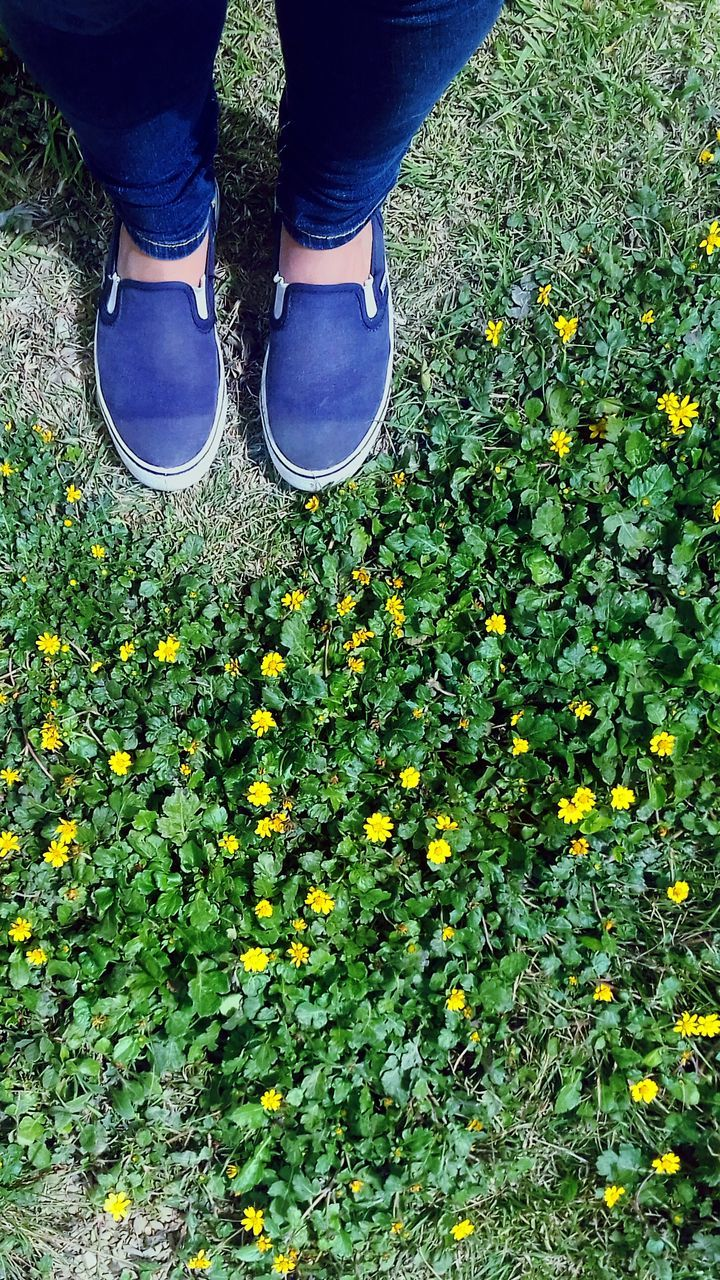low section, human leg, shoe, one person, human body part, standing, high angle view, real people, outdoors, day, plant, growth, flower, yellow, nature, close-up, adult, people