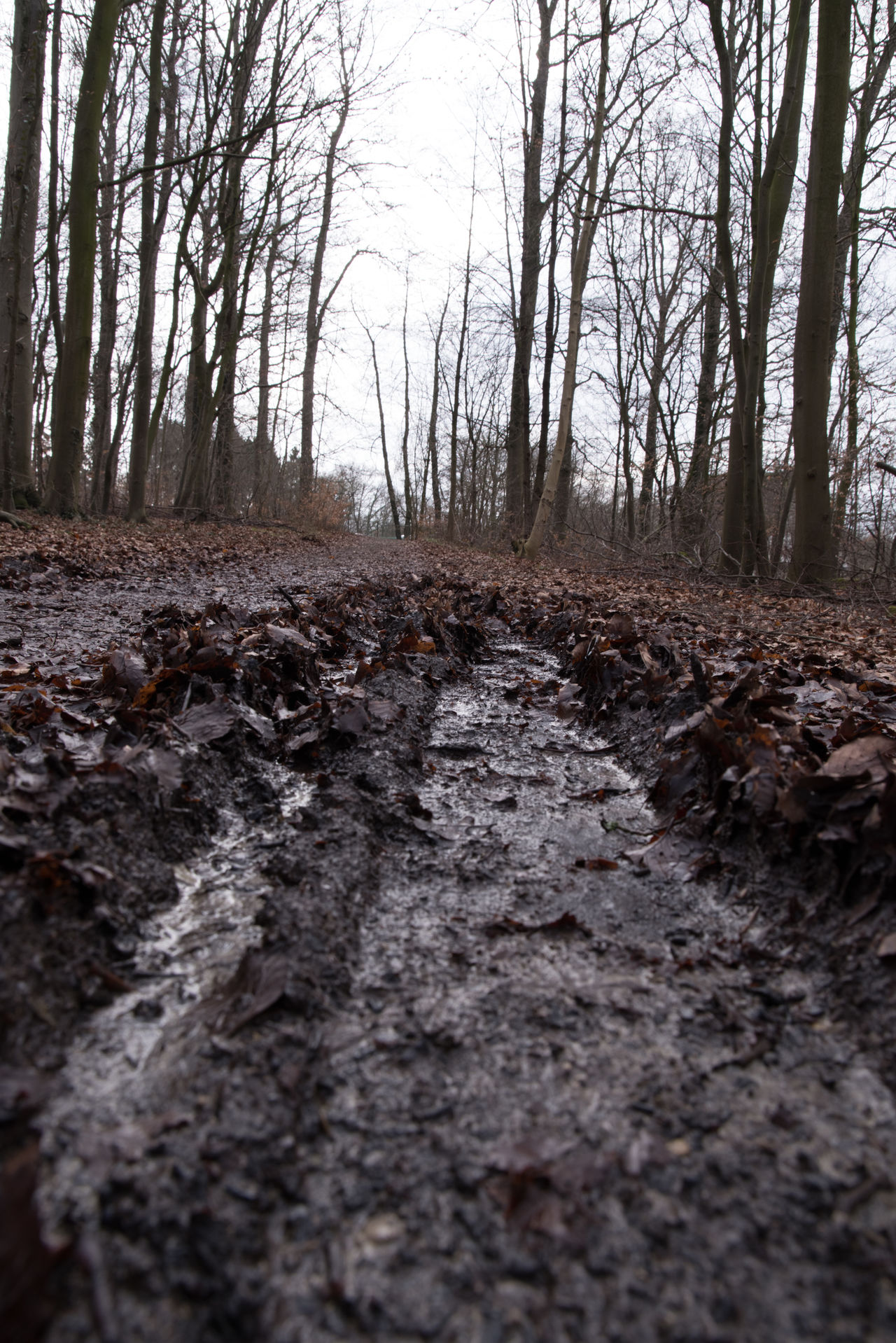 From A Dog's Perspective Bare Trees Beechwood Day Dog's Perspective Forest Low Angle View Muddy No People Outdoors Traces Tree Trunk Trees We Winter