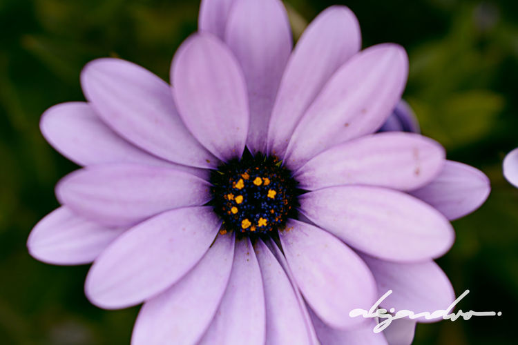 Center of the Universe Beauty In Nature Close-up Cotopaxi Flor Flower Latacunga Nature Petal