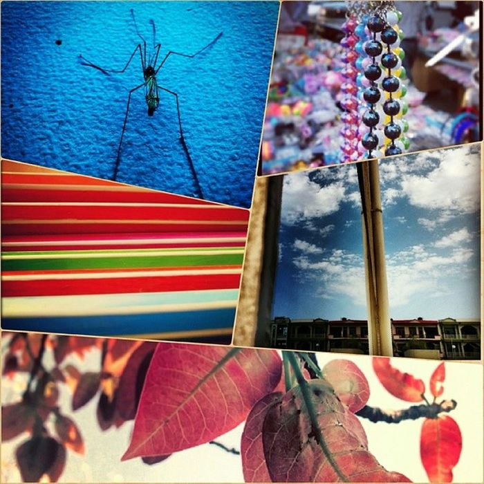 Collage Grid Instapic Favourite Supnadiljitsong Springseasonindia Indianpictures Indiapictures Shadesoflife Sexy