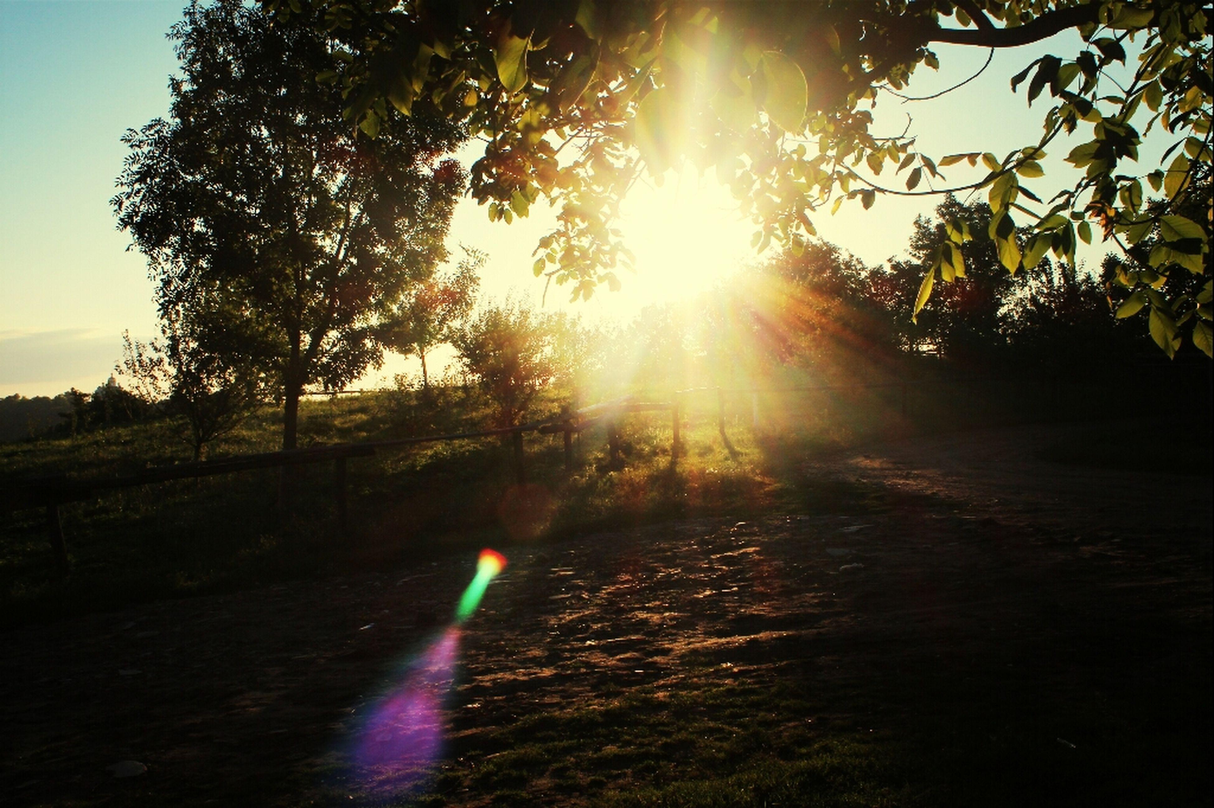 sun, sunbeam, sunlight, lens flare, tree, tranquility, sunset, tranquil scene, nature, scenics, beauty in nature, sky, landscape, sunny, bright, back lit, outdoors, no people, idyllic, non-urban scene