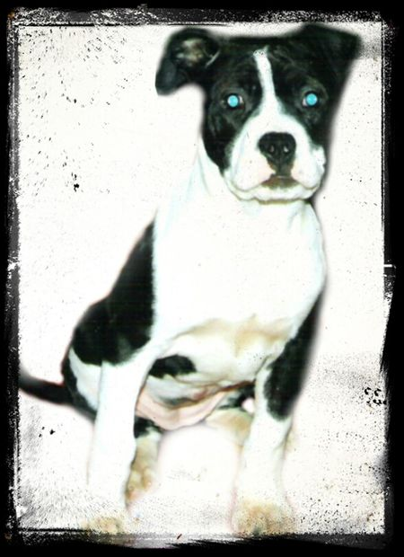 harley_girl@ the age of 6 month
