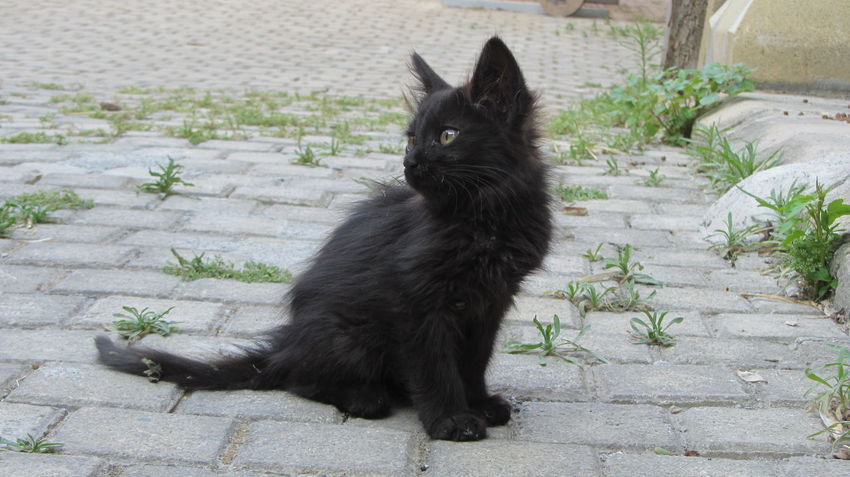 Cyprus Cyprus Cat Nikosia Animal Themes Black Color Cat Day Domestic Animals Domestic Cat Feline Mammal Nature No People One Animal Outdoors Pets Plant Sitting