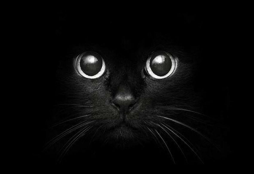 The pain is worldz in the dark, we can leau eyes on it. Cat Black Shadow