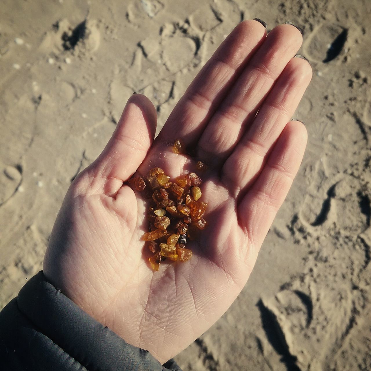 Baltic Amber Beach Personal Perspective Beach Combing Curonian Spit