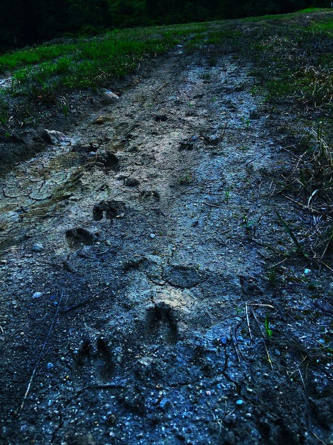 Tracks In The Ground Tracks Tracks... Deer Deers Deer Tracks Check This Out Hello World Nature What I Value Taking Photos Japan Kunisaki Life Landscape