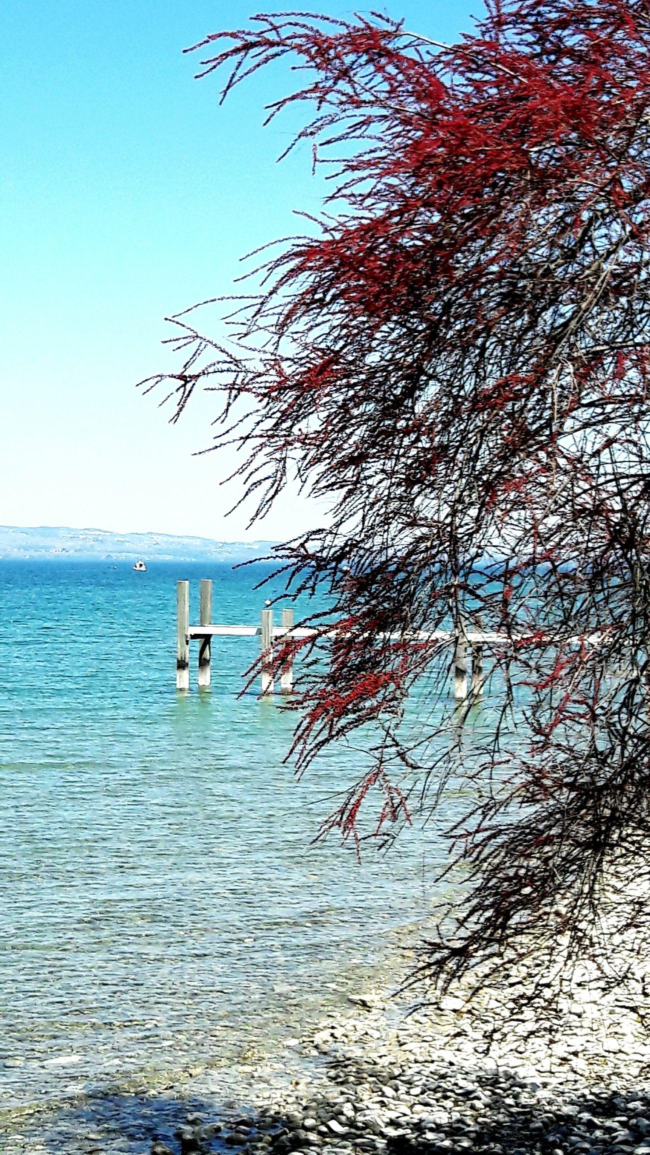 Lake Nature