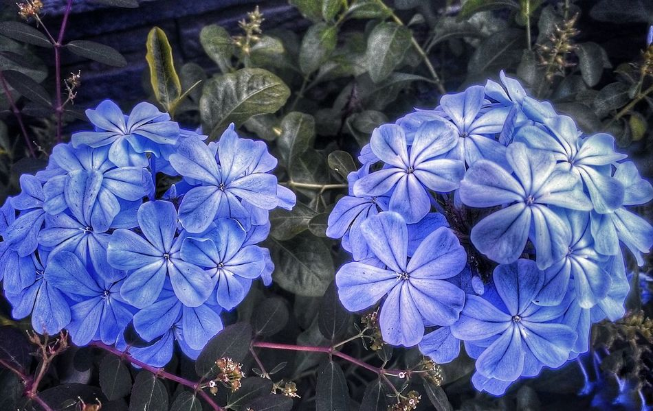Flora. 🌸
