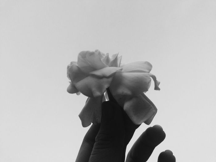 Flower Black & White Blackandwhite Hand