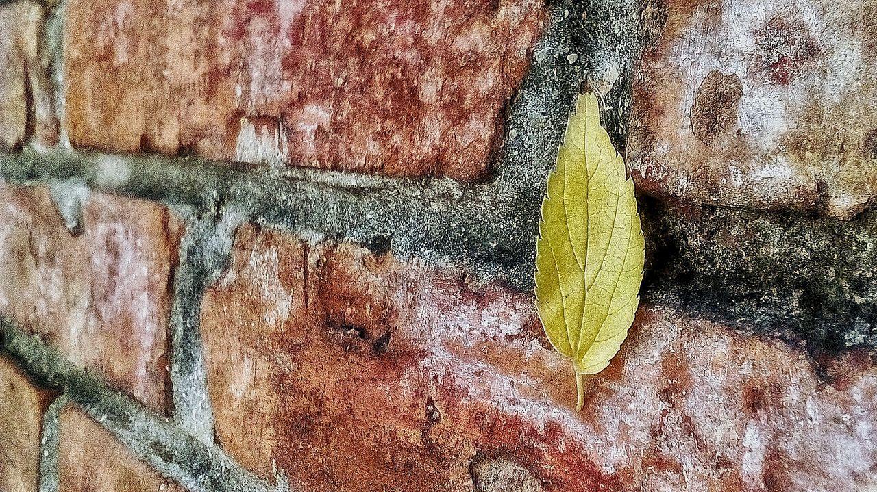 Leaf, hanging on a wall... Leafs 🍃 Leaf 🍂 Beautifully Organized Green Color Green Leaf Brick Wall Brick And Mortar Brick Wall Background Red Brick Wall Red Bricks Red Brick Kantrida Rijeka Rijeka.Croatia❤⛵ Rainy Days☔