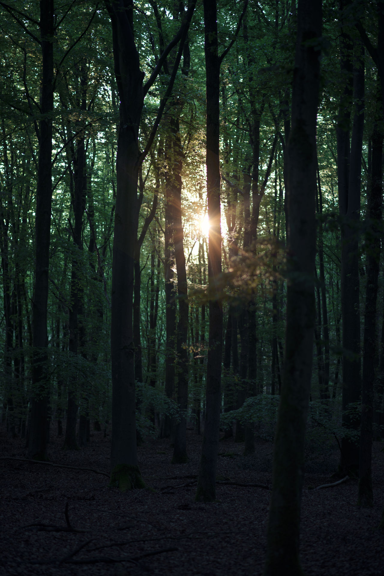 Beauty In Nature Day Forest Growth Nature No People Outdoors Scenics Sun Sunlight Tranquil Scene Tranquility Tree Tree Trunk