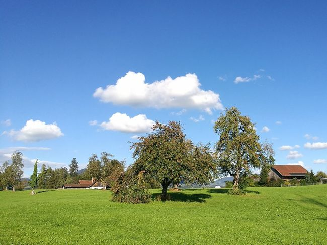 have a good day Good Morning Landscapes Autumn Trees Appletrees Sunnydays