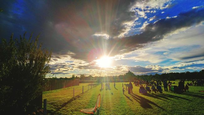 Landscape Agriculture Field Sunlight Tree Beauty In Nature Tranquil Scene Sun Growth Farm Tranquility Scenics Rural Scene Vineyard Nature Sunbeam Sky Plant Cultivated Land Outdoors Check This Out Montanamoment BigSkyCountry The Color Of Sport