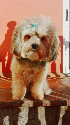 Dogslife Pet Portraits
