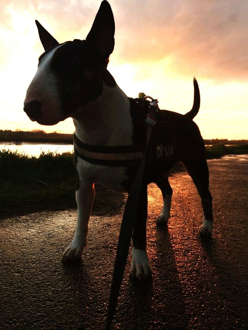 domestic animals, animal themes, mammal, one animal, dog, pets, sunset, outdoors, sky, full length, no people, nature, day