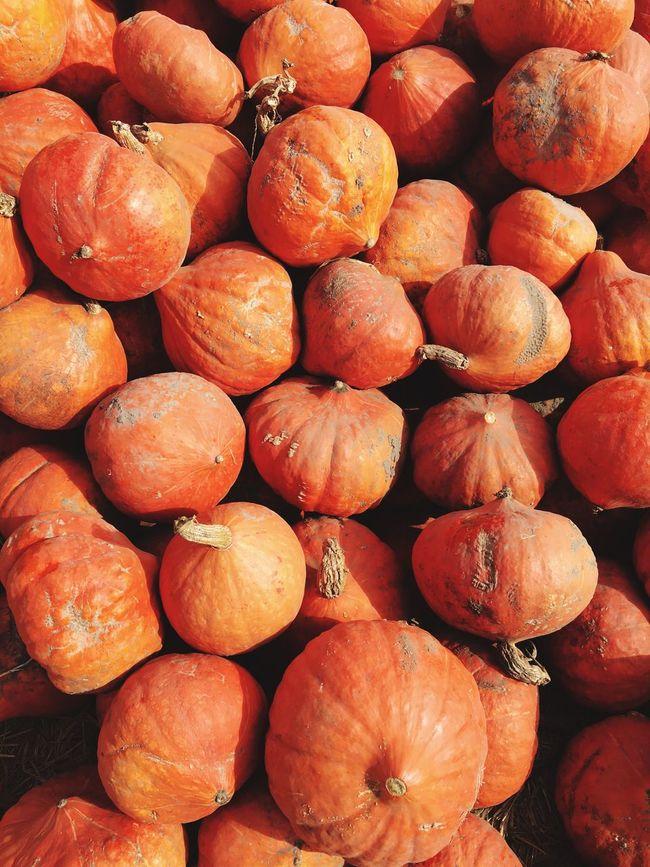 Pumpkins Gourds Orange Burnt Orange Fall October Fresh Produce Organic Santa Cruz California