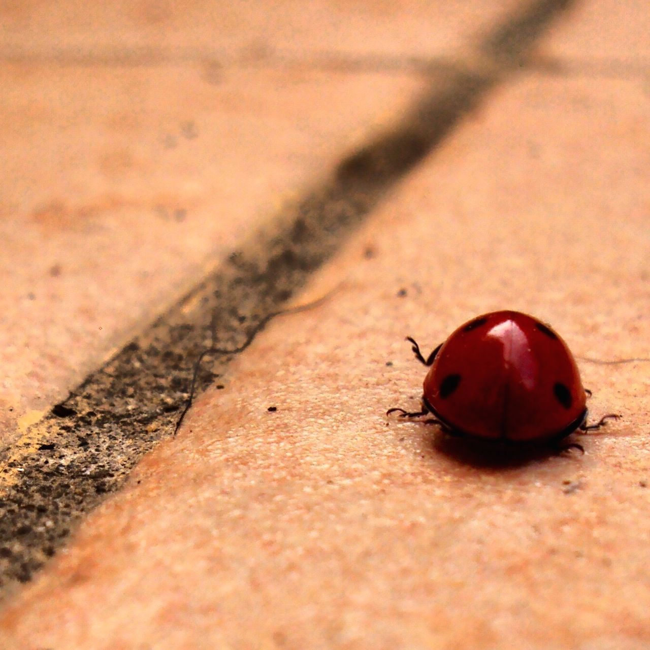 Follow your way. Follower Sempresullamiastrada Ladybug Nikon Coccinella Travel