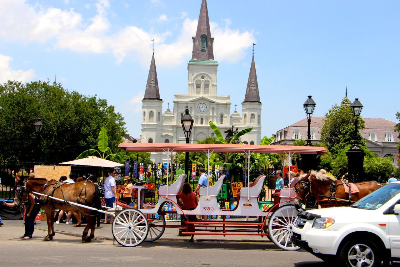 Service Animals Jackson Square New Orleans Horse Taking Photos With Friends Horse Carriage
