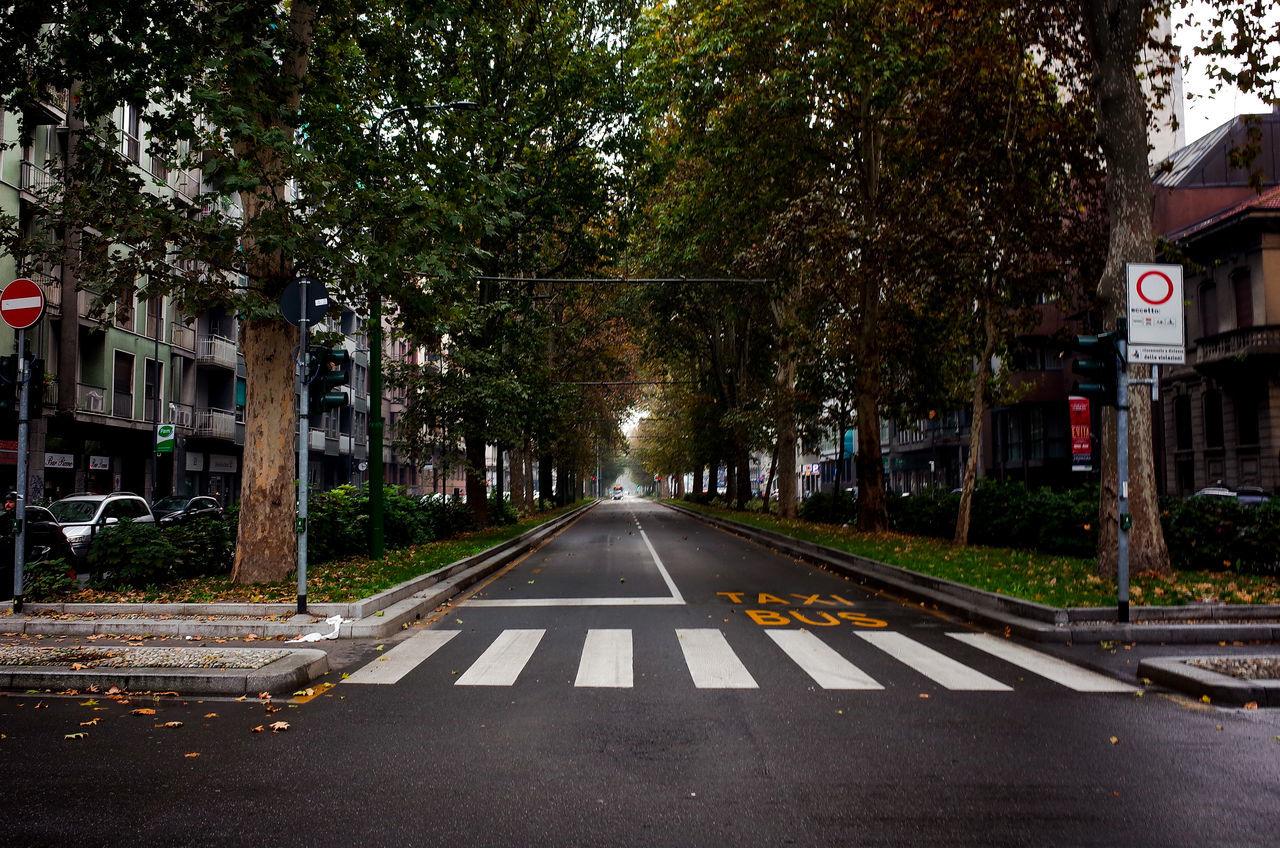 tree, transportation, street, road, the way forward, outdoors, no people, city, day
