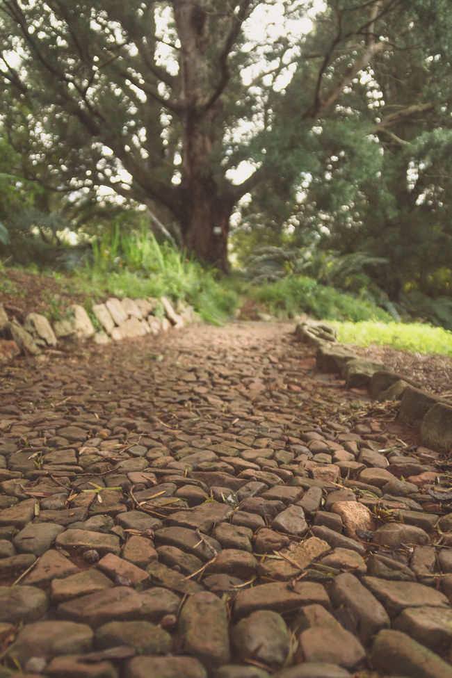 Abundance Cape Town Cape Town, South Africa Cobblestone Diminishing Perspective Footpath Forest Garden Green Green Color Growth Kirstenbosch Kirstenbosch National Botanical Garden Nature No People Outdoors Pathway Plant Selective Focus Surface Level The Way Forward Tranquil Scene Tranquility Tree Vanishing Point