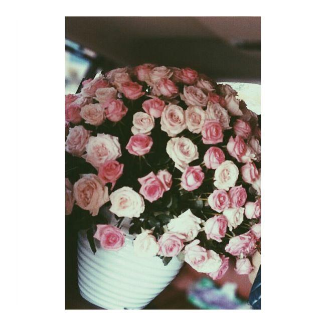 170roses Flowers Besthubbyever