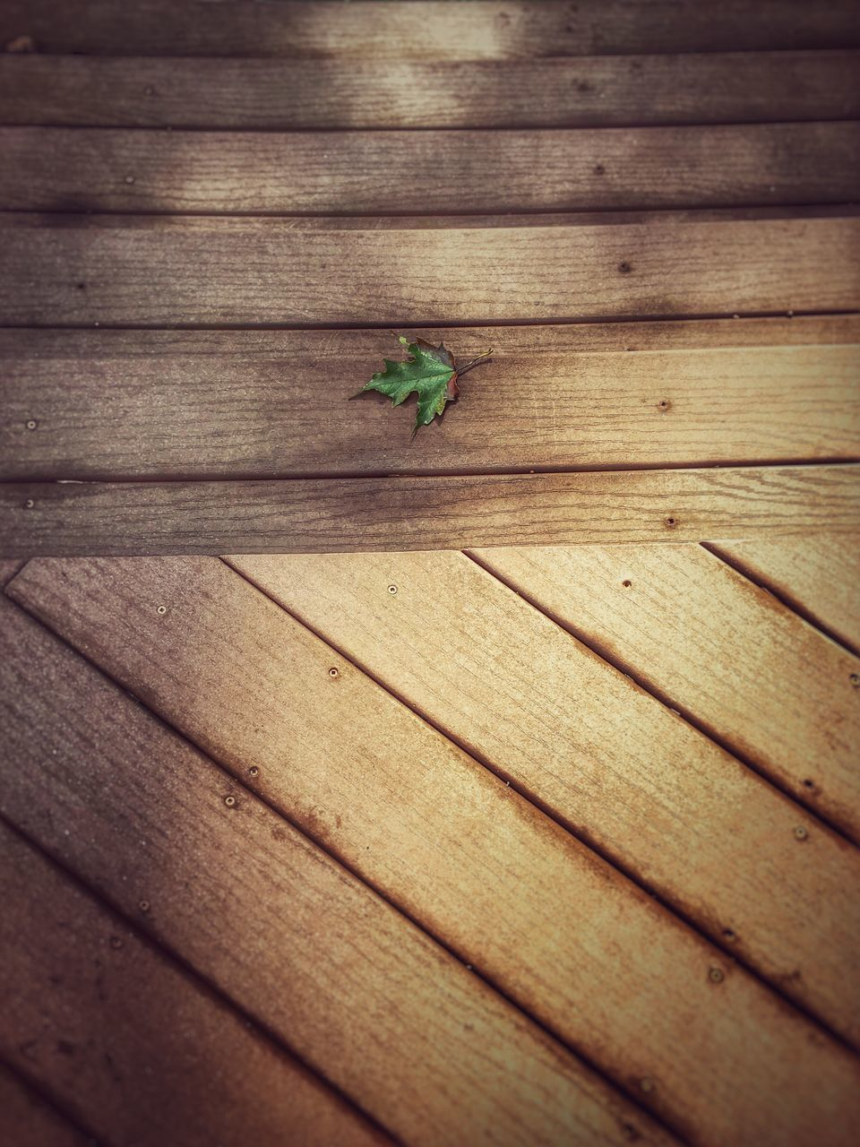 wood - material, insect, high angle view, nature, no people, indoors, close-up, animal themes, day