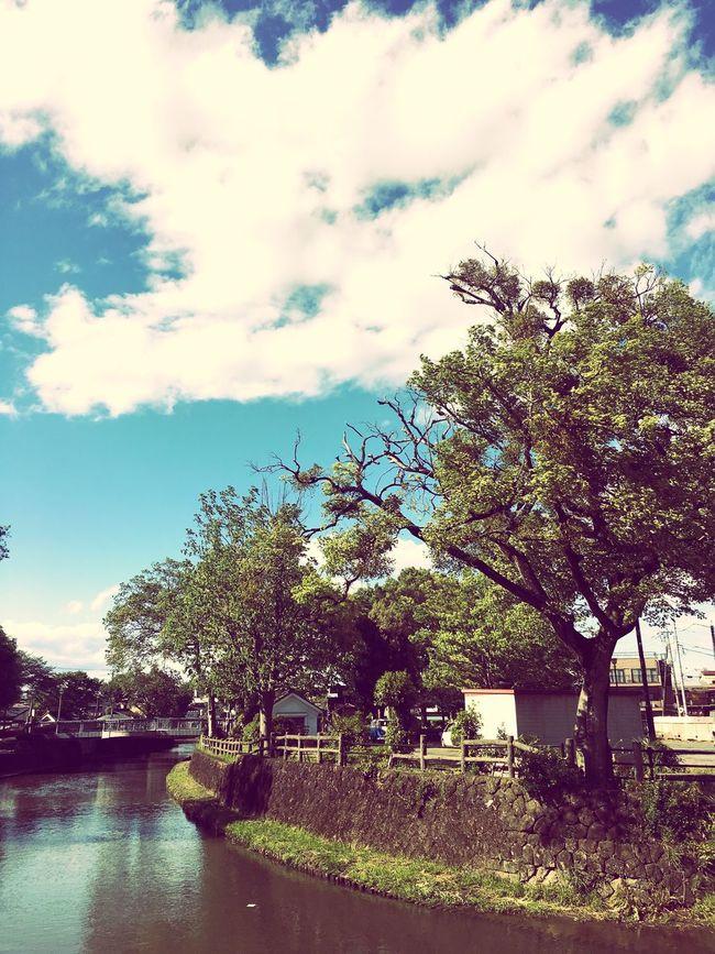 Beautiful Beautiful Nature Beautiful Day Sky Clear Sky Tree Trees Springtime Japan EyeEm Nature Lover Urban Spring Fever