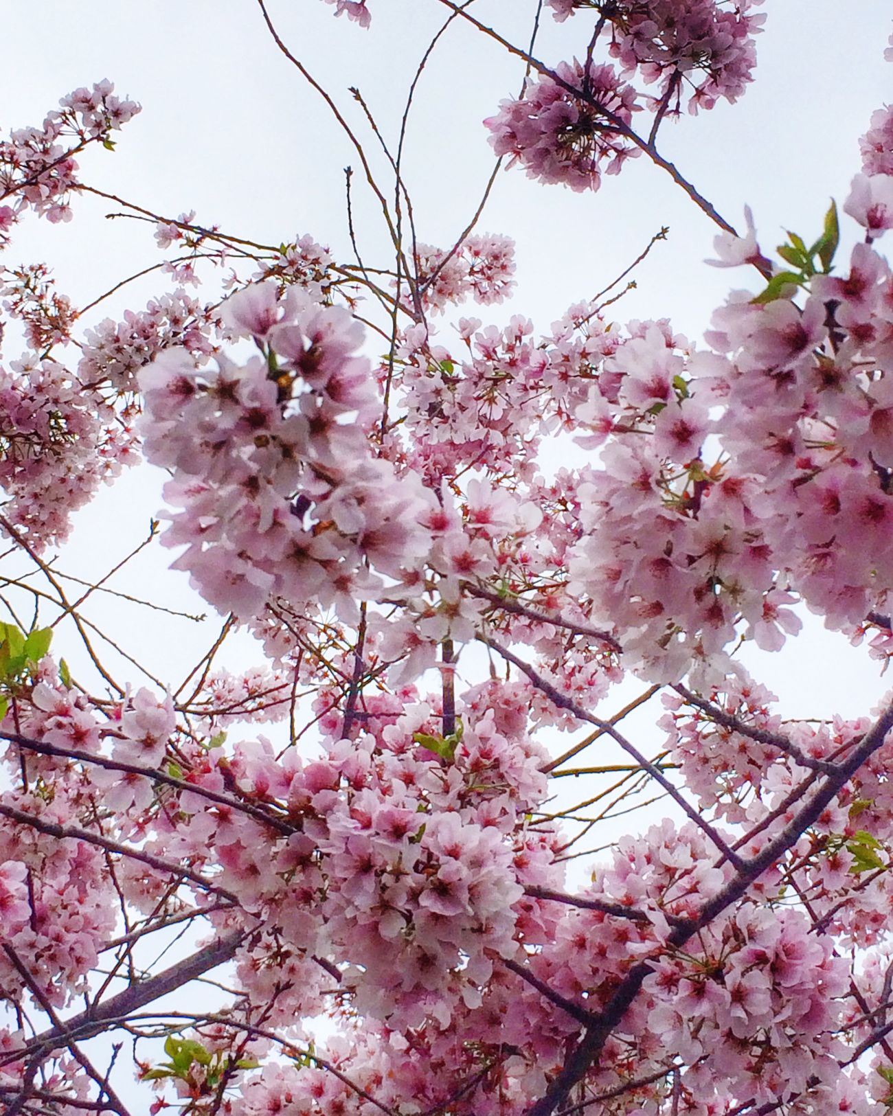 Spring Blossoms Tadaa Community Nature Trees