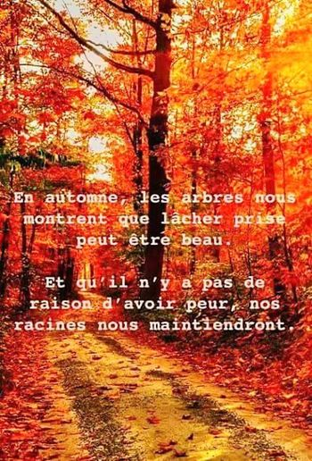 Alors pourquoi hésiter ??? Lâchons-nous ! Autumn Outdoors Phrase Of The Day Humour Is Good For The Soul Phrases To Think About Think About... From My Point Of View Citation☁💭 Philosophyoflife