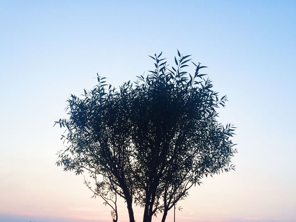 Hello World Enjoying Life Follow Me Sky Tyumen Siberia Photo