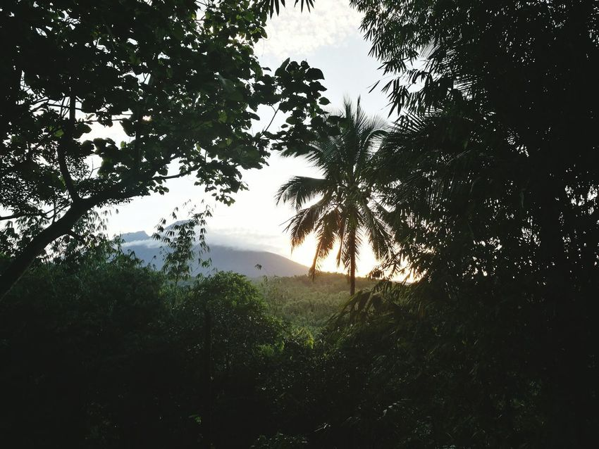 Quick view of the Mt. Banahaw from Kamay Ni Hesus, Lucban, Quezon Nature Outdoors Kamay Ni Hesus Biology Quezon Lucban HuaweiP9 Having Fun With Photography HuaweiP9Photography Casual Afternoon Newbie Photography South Luzon Philippines Leaf Day Huawei Province