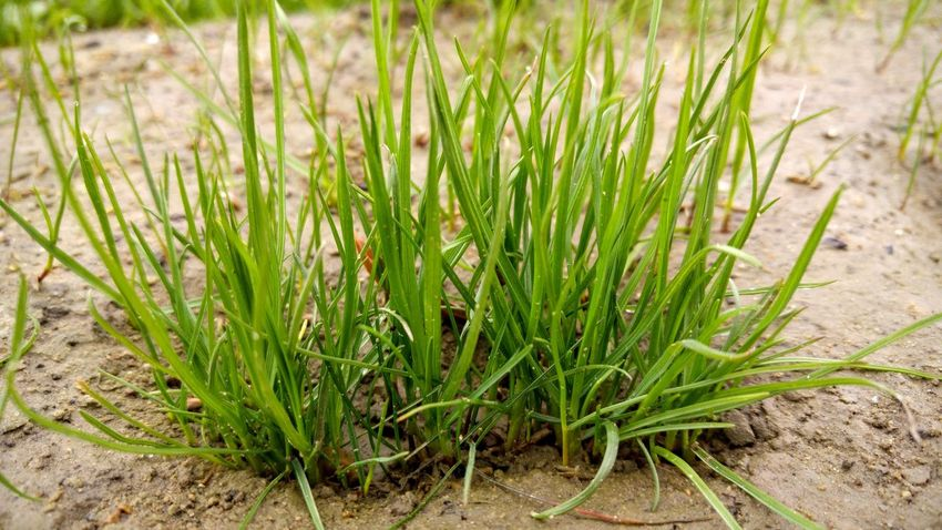 Beauty In Nature Close-up Day Freshness Grass Green Color Growth Nature No People Outdoors