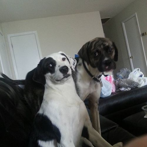Smile puppies! Cassie: *grins* Nami: I can't. I have a frowny boxer face Frownyboxerface