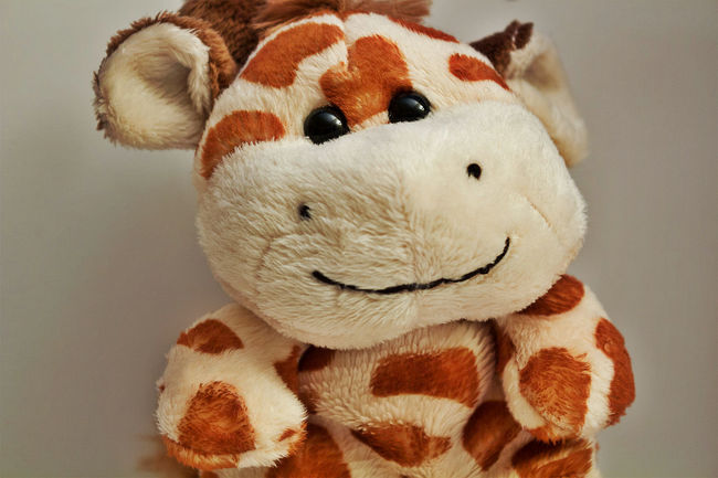 Abundance Animal Representation Animal Themes Brown Childhood Close Up Close-up Comfortable Cute Indoors  Indulgence One Animal Preparation  Sitting Softness Still Life Stuffed Toy Temptation Toy Variation