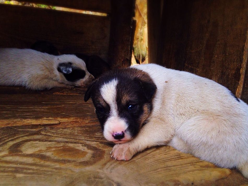 Puppies🐶 Babies Baby Dog Dogs Dogslife Babydog Life MyPhotography MyPuppy❤ Sunshine Love IPhone5 Macro Photography Macro Relaxing Sleaping Dream Dreaming Capture Moment Princess This Eyes Eyes