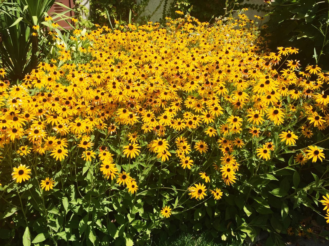High Angle View Of Fresh Yellow Flower Bunch In Garden