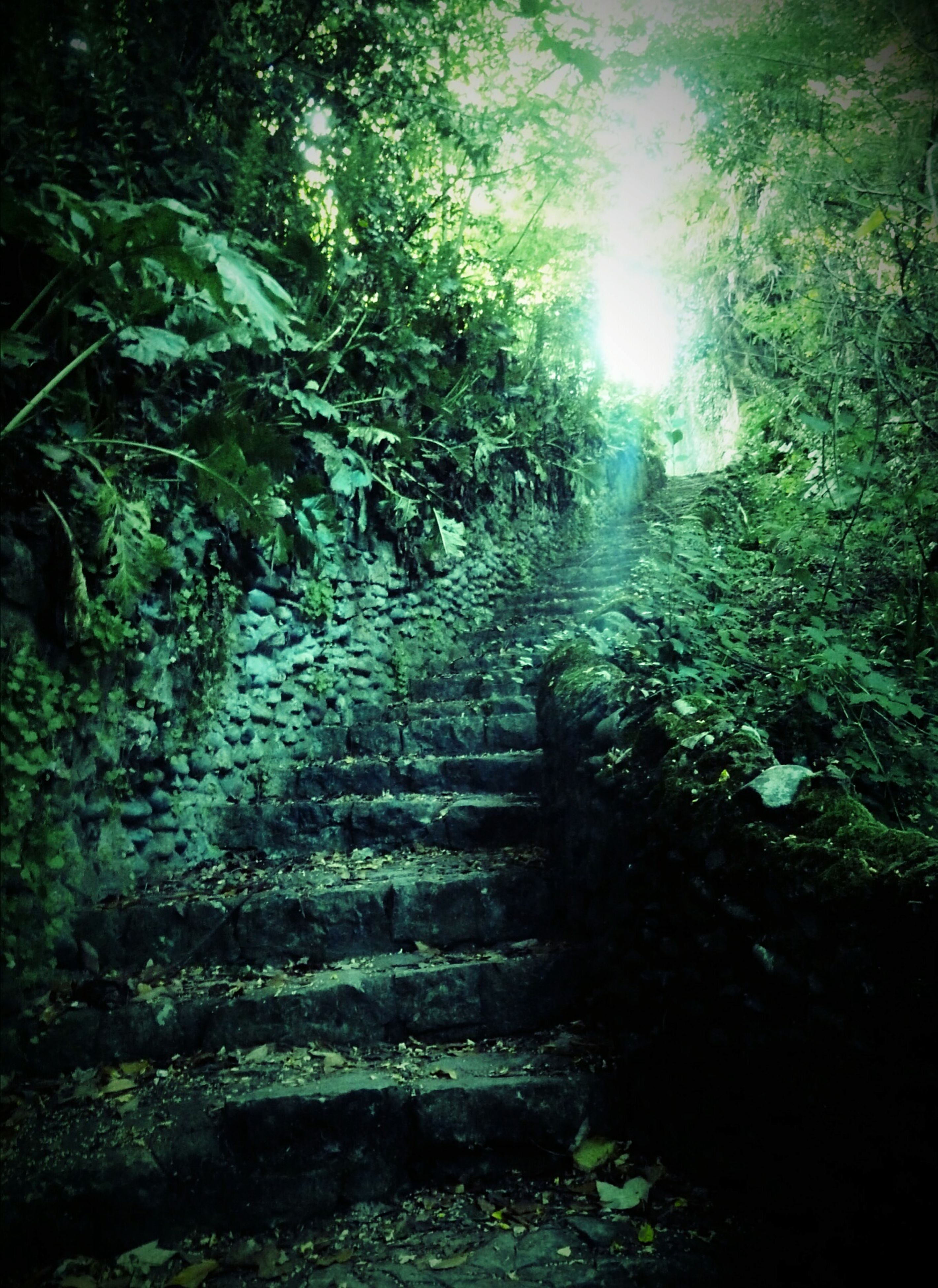 tree, steps, the way forward, forest, growth, tranquil scene, tranquility, plant, staircase, nature, scenics, green color, outdoors, day, footpath, solitude, narrow, non-urban scene, beauty in nature, lush foliage, long, woods, no people, green