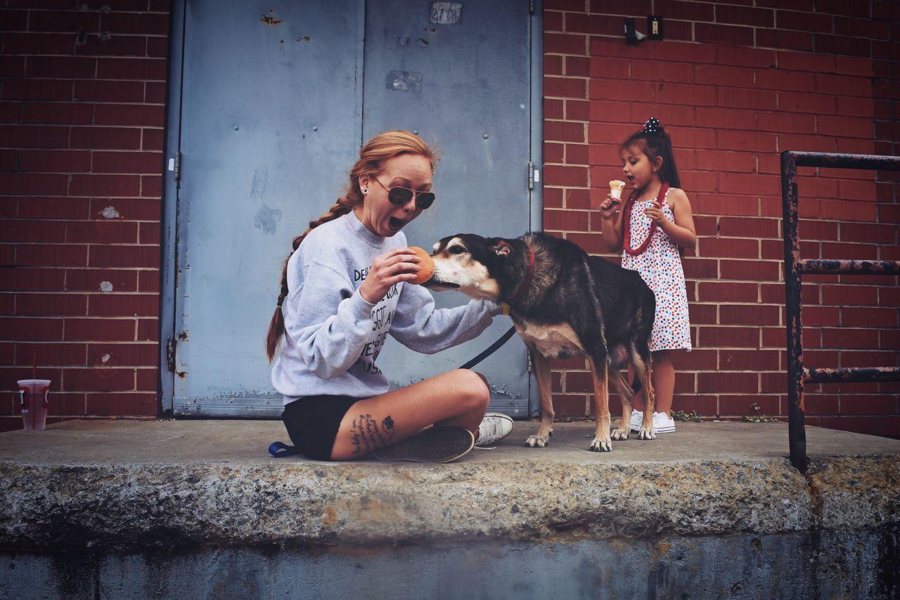 Beautiful stock photos of lustige tiere, dog, pets, one animal, animal themes
