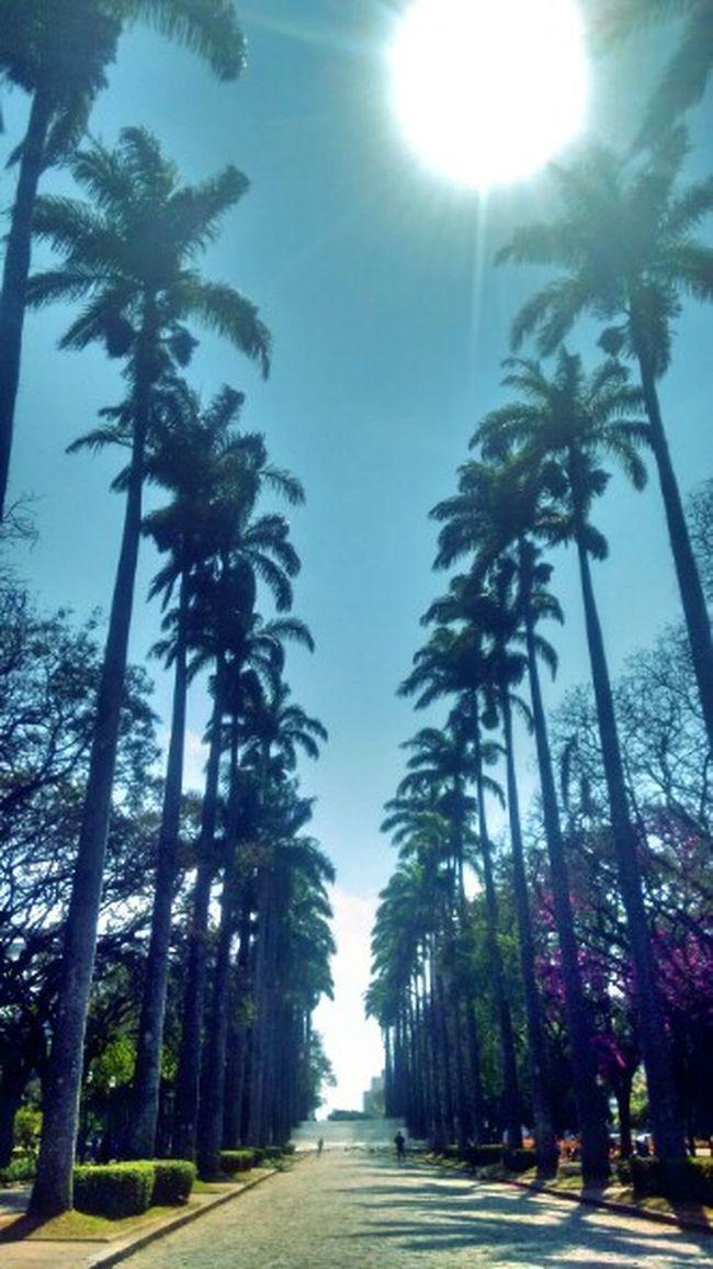 Tree Tranquility Relaxing Littlethings Alternativelife GoodTimes Aroundtheworld Wanderlust Photography Inspiratiions Goodvibes✌️