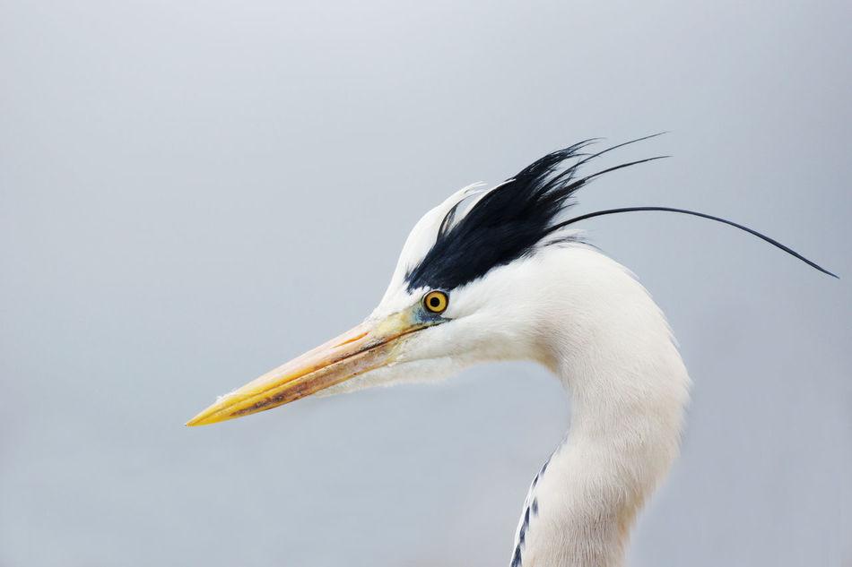 Beautiful stock photos of jagd,  Animal Feather,  Animal Head,  Animal Themes,  Animal Wildlife