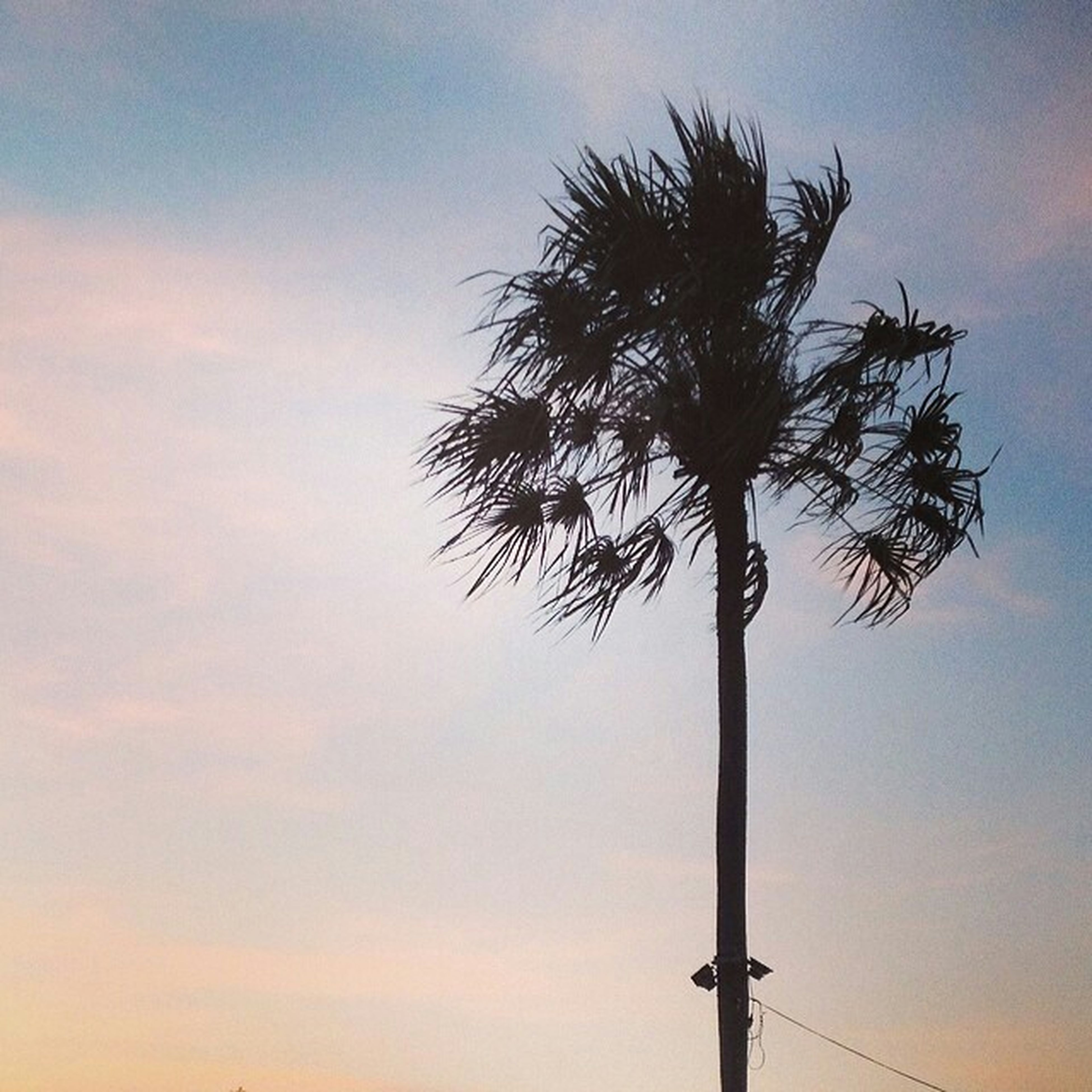 low angle view, sky, tree, silhouette, palm tree, tranquility, nature, growth, sunset, beauty in nature, tree trunk, tall - high, branch, street light, cloud - sky, no people, outdoors, pole, scenics, cloud