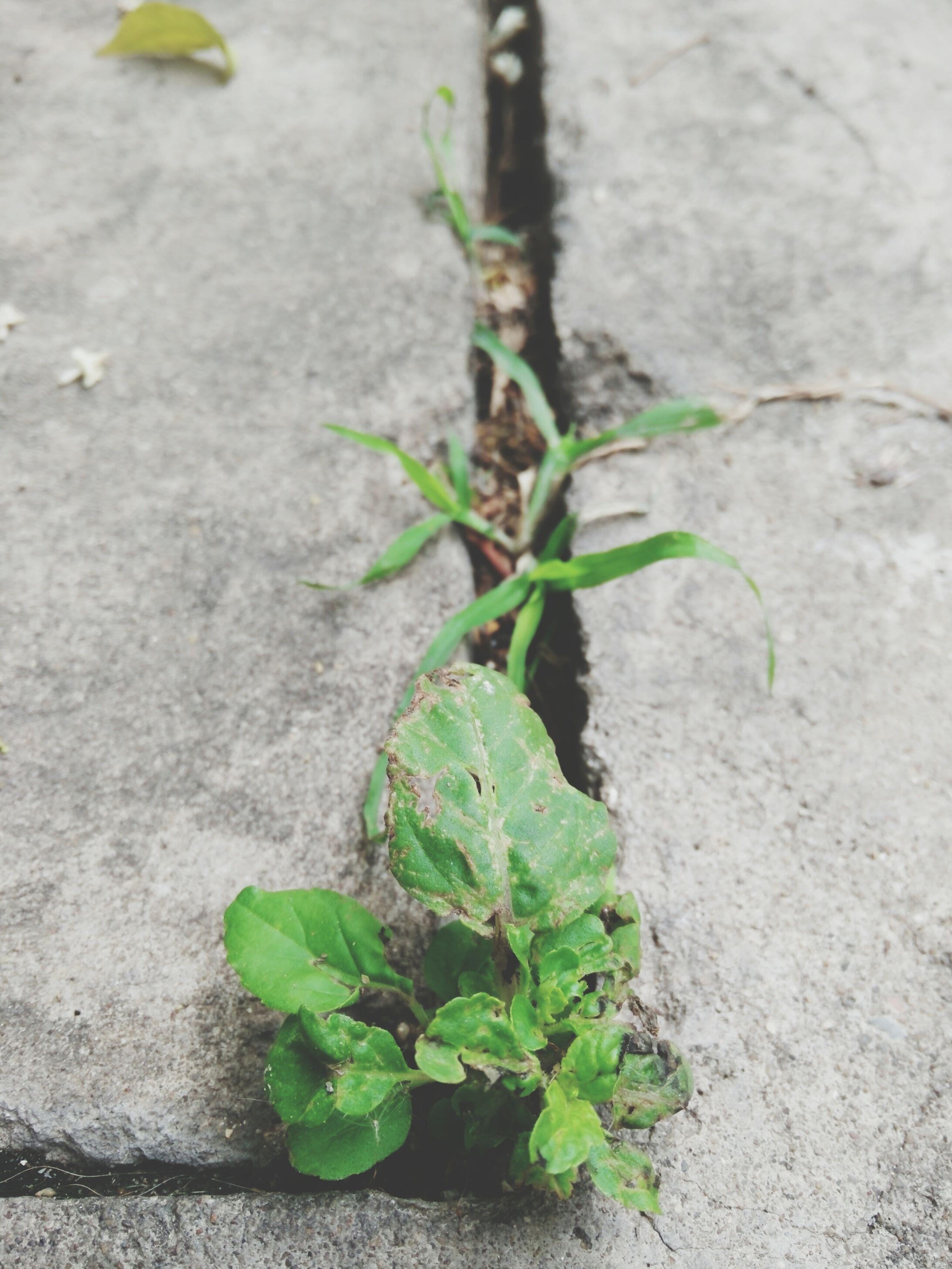 leaf, plant, growth, green color, wall - building feature, close-up, growing, nature, textured, high angle view, day, outdoors, ivy, no people, wall, green, built structure, potted plant, fragility, freshness