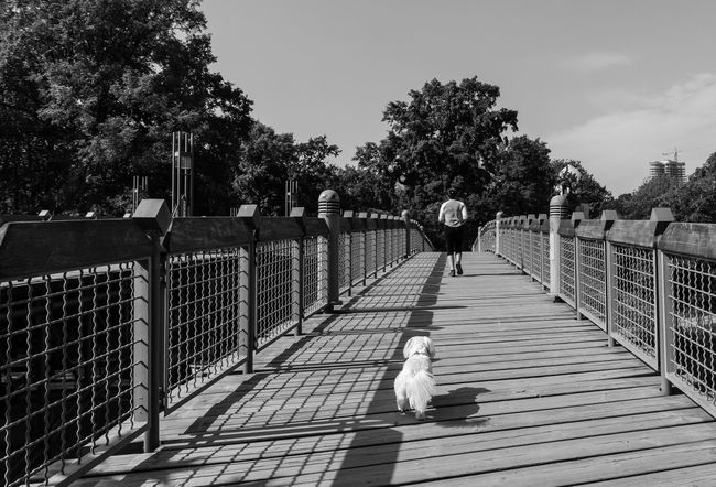 the Follower ;-) B&w Street Photography Black And White Blackandwhite Bridge Brücke City Life Dog Footpath Hund Jog Jogger Jogging Leisure Activity Lifestyles Maltese Malteser Outdoors Railing Running Sport Street Photography Streetphoto_bw Streetphotography The Way Forward Walkway