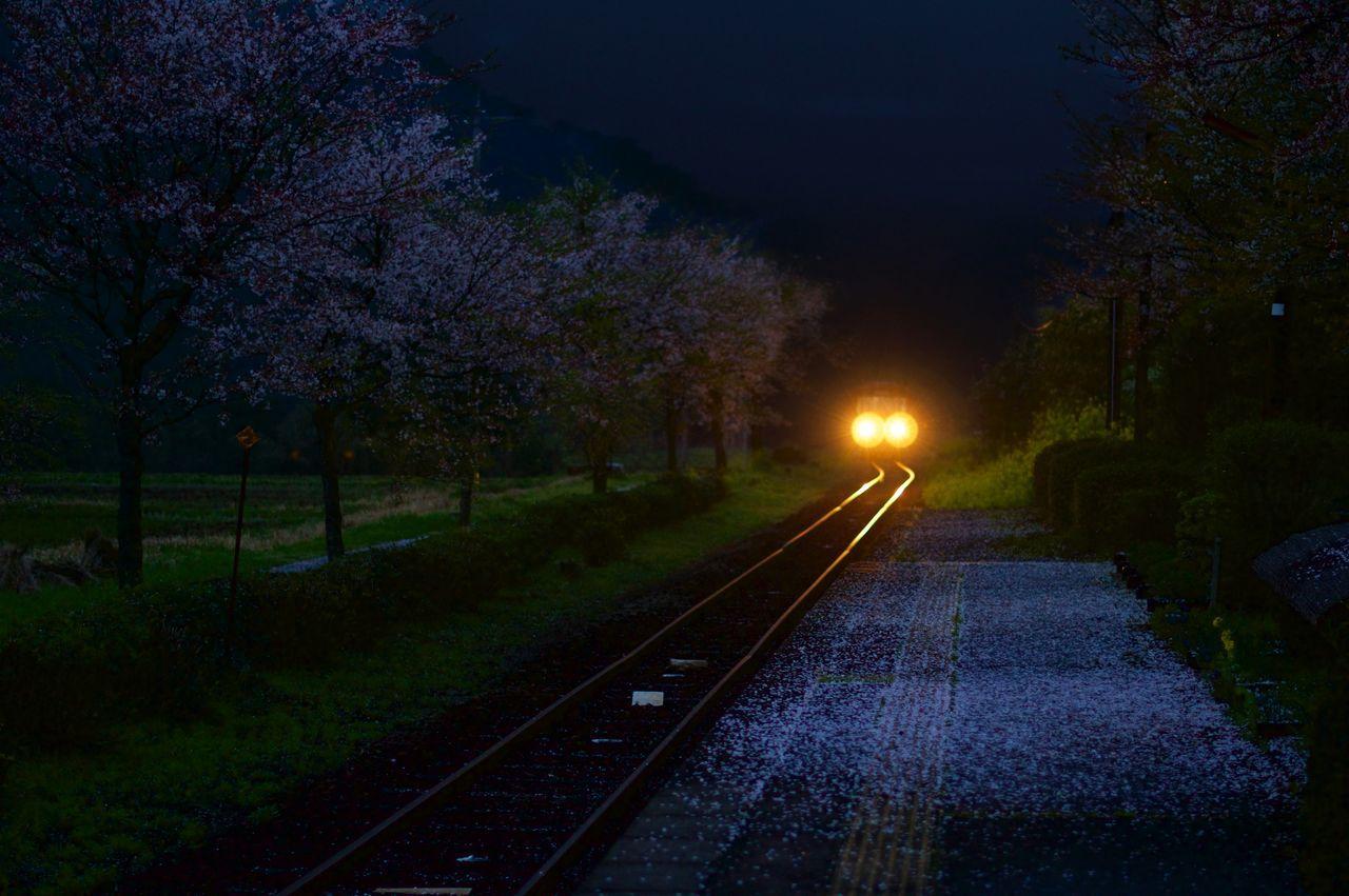 transportation, tree, no people, night, railroad track, beauty in nature, nature, the way forward, rail transportation, illuminated, outdoors, scenics, sky