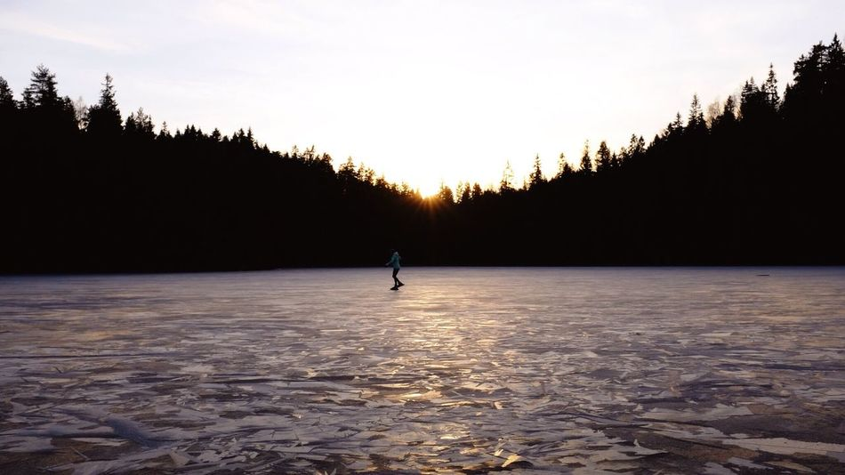 Ice Skating on the Lake in the Twilight . Forest Lake Forest Trees