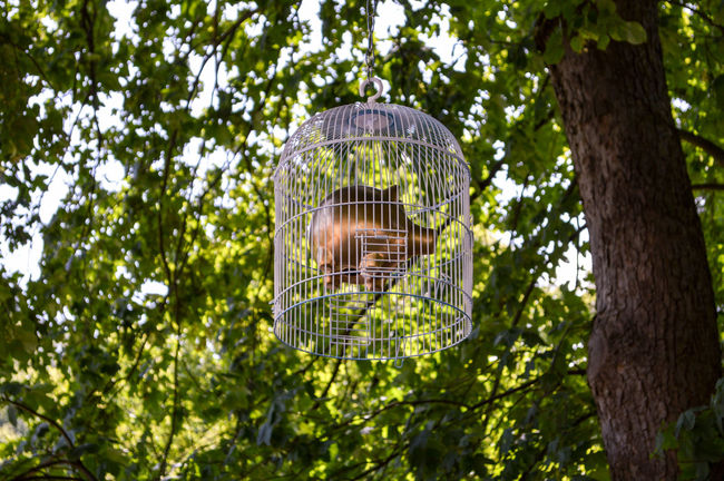 a pig in a cage Beauty In Nature Cage Close-up Day Eye4photography  From My Point Of View Funny Getting Creative Green Green Color Growth Hanging Out Low Angle View Lush Foliage Nature Outdoors Pig Taking Photos TheWeekOnEyeEM Tranquility Tree Tree Trunk