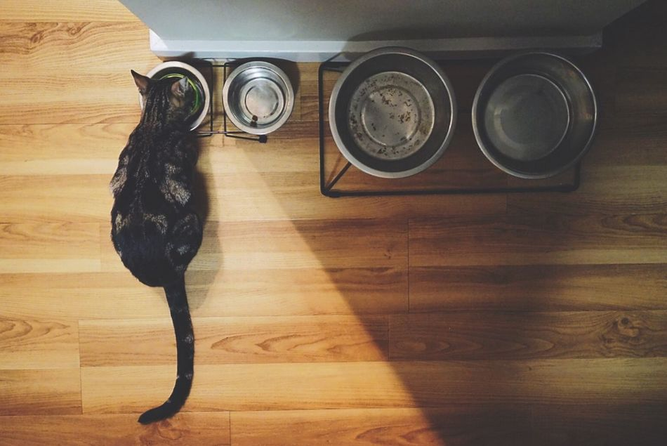 A cats got to eat. Edited using Enlight app on my iPhone. Cat Eating Catoftheday Natural Light Cat Food Overhead View SONY A7ii Check This Out IPhone Editing Enlight