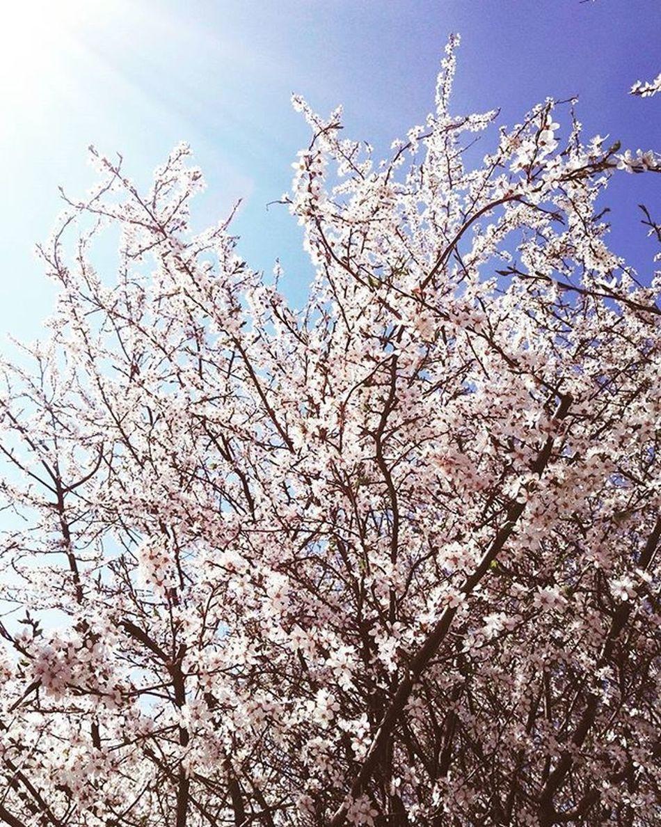 It's so lovely in here 💚 Spring Nofilter Love Walk Tree Flowers Flower Fresh